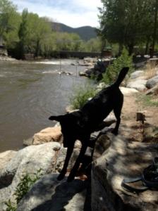 River on the Arkansas