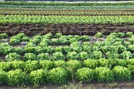 No monocrops, no grain subsidies, no big agra