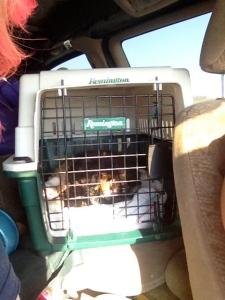 Our feline passenger today