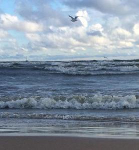 I've done ocean swims calmer than this.